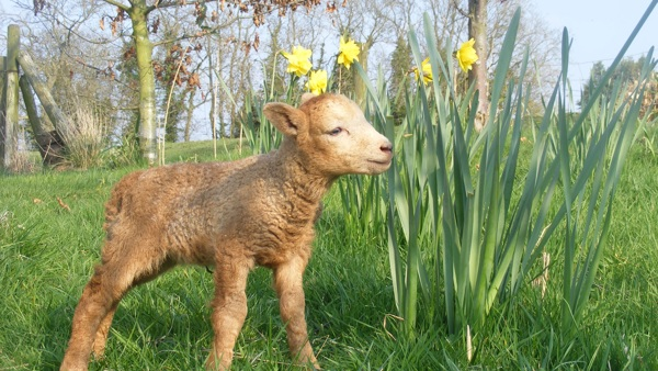 Easter is a time for celebrating new life on our farms and in our countryside!