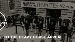 UK Working Class Horse Heroes Facing Extinction