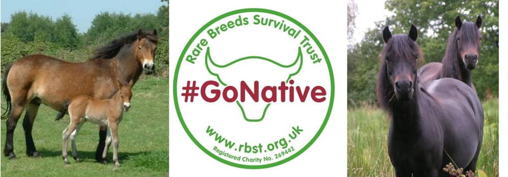 Rare Breed Briefing -Why you should be using native ponies for conservation grazing