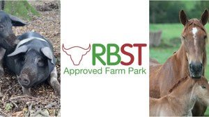 Chatsworth Farmyard Awarded Rare Breeds Accreditation